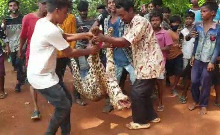 असम में भूखे तेंदुए की पीट-पीट कर हत्या, दांत और नाखून भी निकाले - सूचना