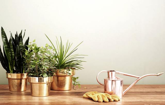 Three gold-coloured galvanized pots filled with greenery, a rose gold watering can and a pair of tan gardening gloves on a wooden table.