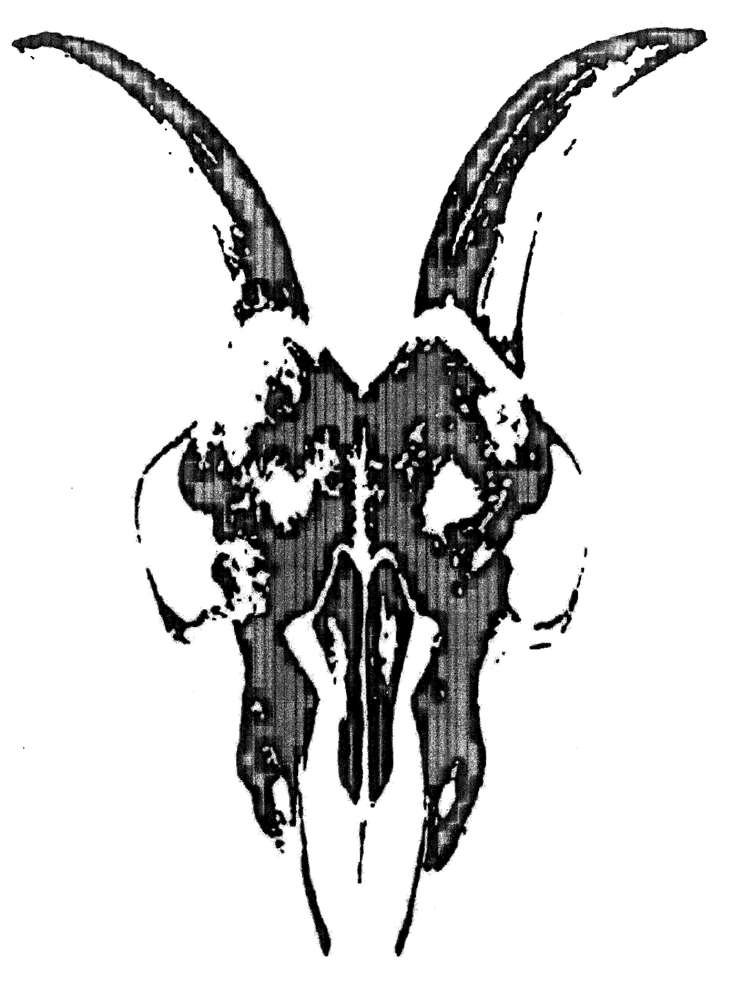 Rams Skull Stylised By All Saints Retail Limited