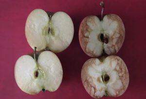 Two apples split in half.