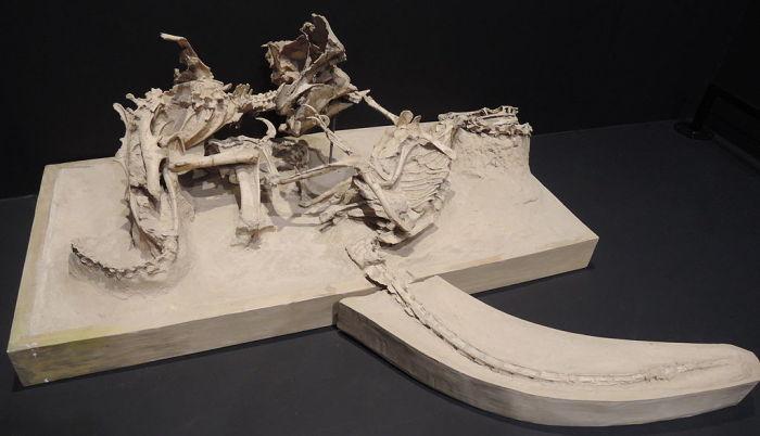 Они застыли в смертельной схватке на миллионы лет. /Фото:blogspot.com