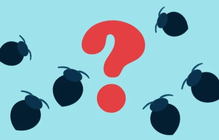 What Should I Do If I Find Bed Bugs?