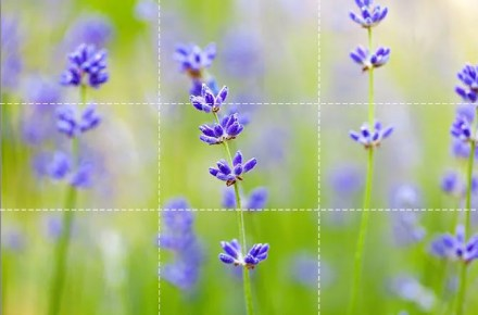 Field of flowers shot with shallow depth of field