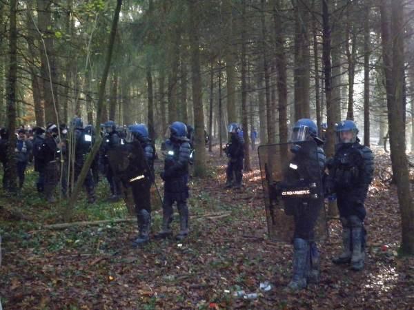 Des cordons bleus de poulets allignés dans la forêt