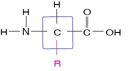 Level 2 - Amino Acid Structures - Memrise