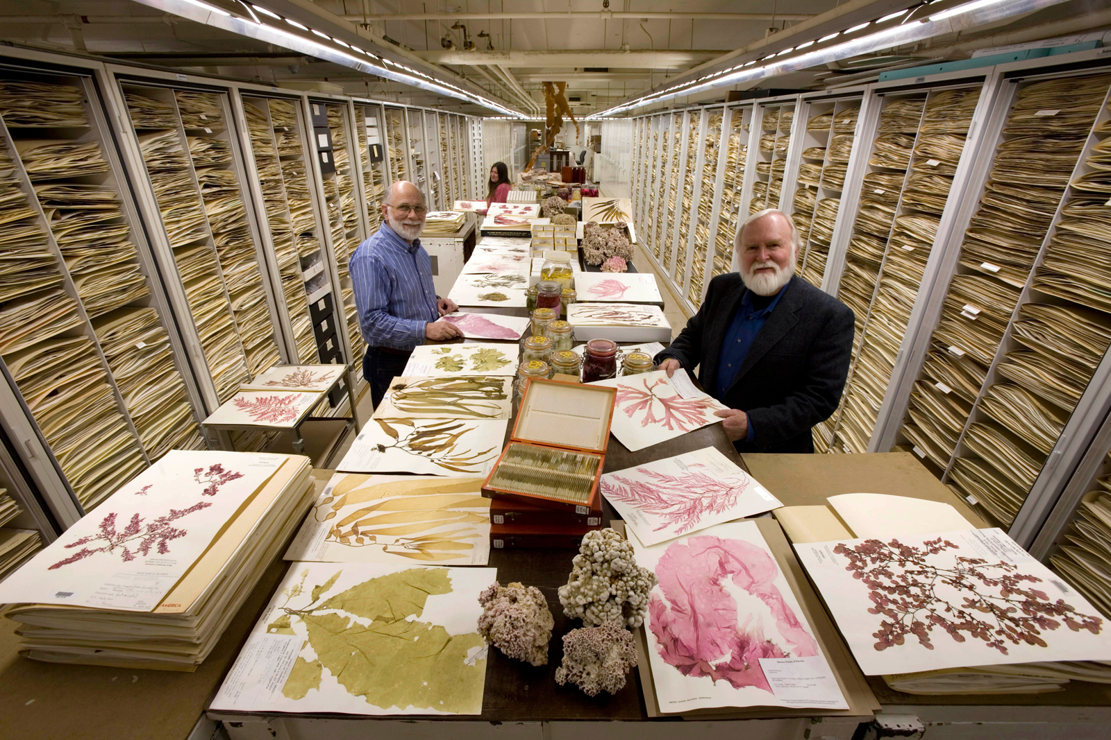 Botany Algae Collection, National Museum of Natural History