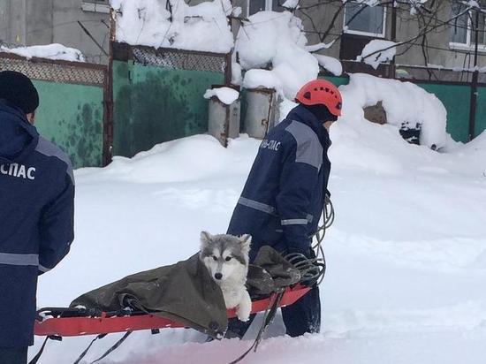 Кубанские спасатели помогли застрявшей в снегу собаке - МК ...