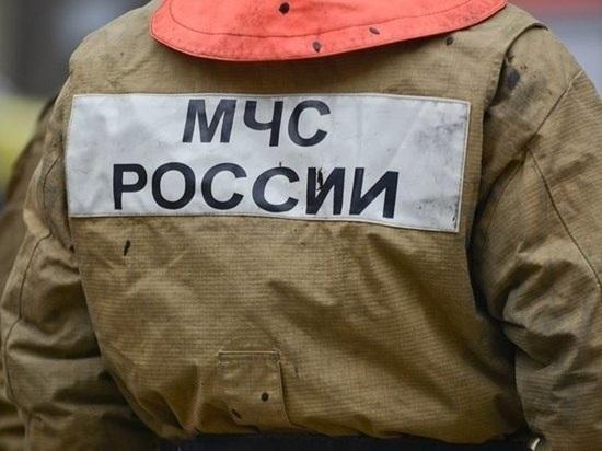 В Екатеринбурге ищут мужчину, который жарил шашлыки на ...