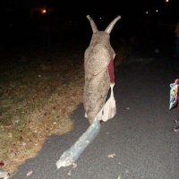 """Halloween ou les dangers du costume """"cheap"""""""