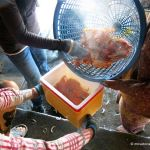 Cooking crabs at Kep Crab Market