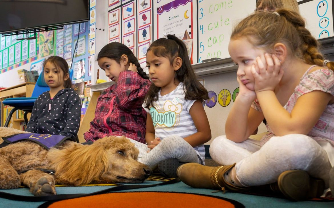 "School children warily eye ""Rudy,"" an emotional support dog brought in on the first day of ..."