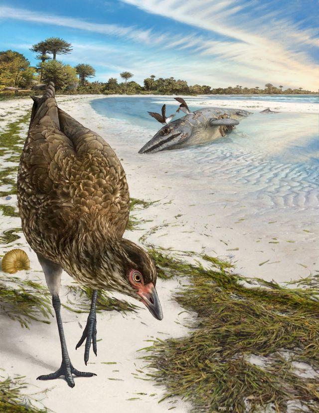 Reconstrução da ave moderna mais antiga do mundo, Asteriornis maastrichtensis, em seu habitat original, feita por ...