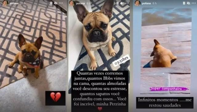 Influencer publicou fotos da cachorrinha em seu perfil no Instagram – Foto: Reprodução/ND