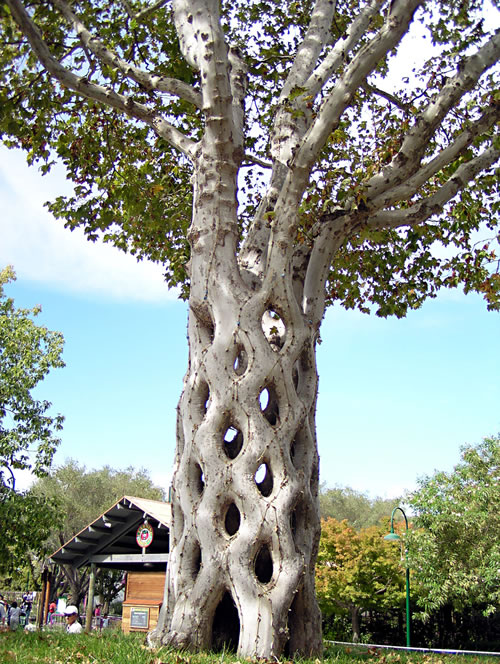 Basket Circus Tree