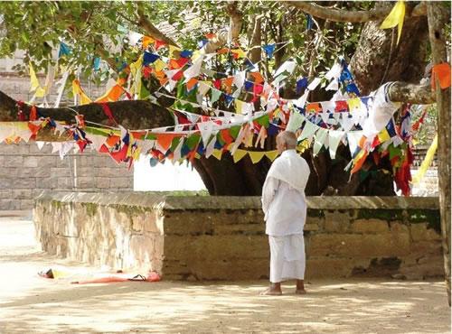 Sri Maha Bodhi