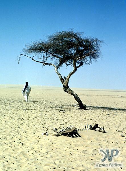Tree of Tenere