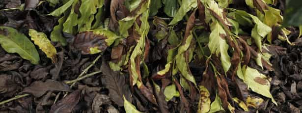 Família de indígena cria santuário de sementes nativas na Costa Rica