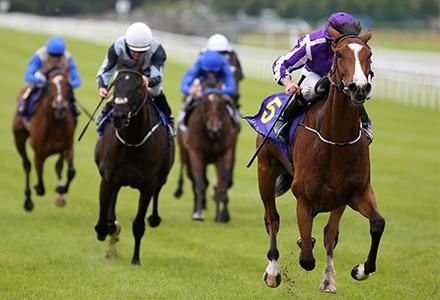 UK Horse Racing Tips: Curragh | Oddschecker