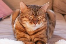 People Can Communicate With Cats by Blinking Really Slow, New Study Confirms | PEOPLE.com