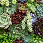 One Thing I Wish Someone Told Me Before I Started A Succulent Garden Southern Living