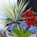 Heat Tolerant Container Gardens For Sweltering Summers Southern Living