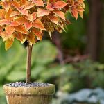 How To Make A Topiary For Your Garden Better Homes Gardens