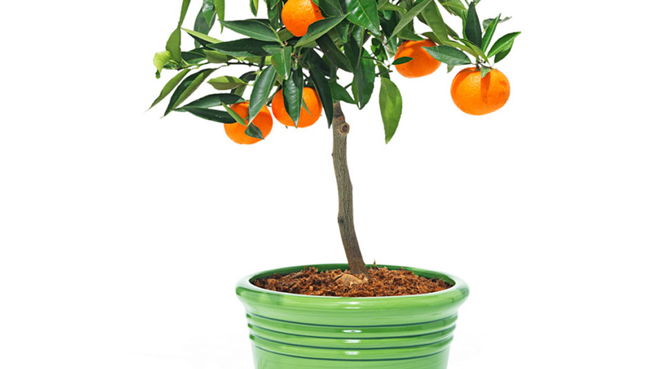 Planting Privacy Tree Ideas