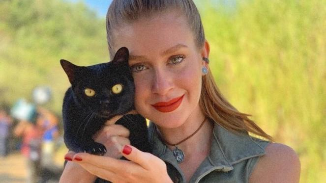 Gato de O Sétimo Guardião pertence a veterinária Patrícia Rober