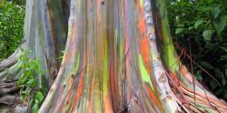 Pohon Warna WARNI