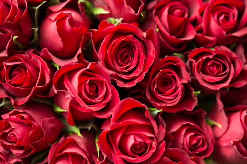 Image result for rose