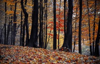 https://www.pexels.com/photo/autumn-branch-dawn-environment-349447/