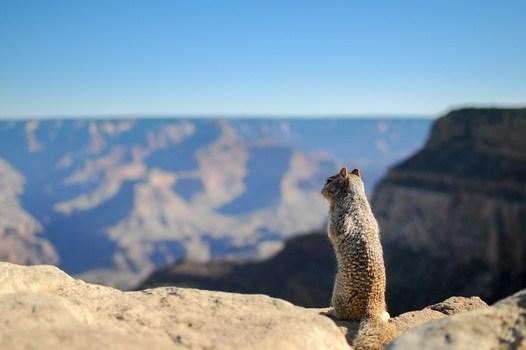 Free stock photo of landscape, animal, mountain, top