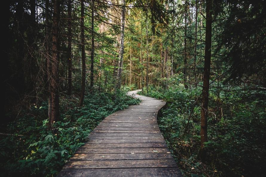 dense, forest, path