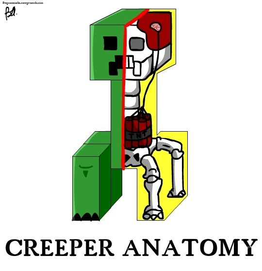 Minecraft Wallpaper Creeper Anatomy