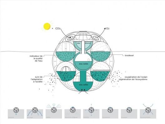 Bloom: Granja flotante de fitoplancton