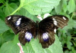 A beautiful broken butterfly at the Natural History Museum, London. Photo Paula…