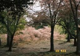 Trees in one of the oldest cities in Japan Nara. PhotoChikashi Suzuki