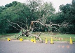 Tree, Tokyo. Photo Chikashi Suzuki