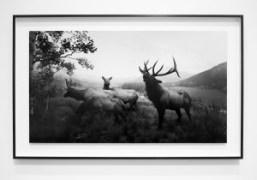 """Hiroshi Sugimoto """"Still Life"""" at Pace Gallery, London"""