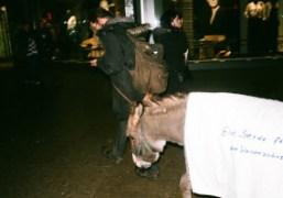 A donkey in Berlin. Photo Maxime Ballesteros