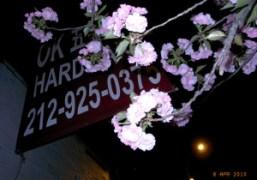 Spring flowers outside Omen, New York. Photo Olivier Zahm