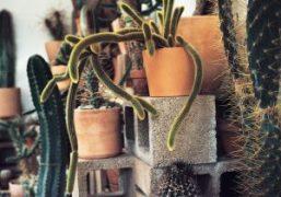 Cactus Store