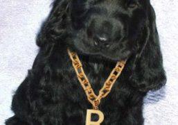 Purple WANT: B Chain Necklace by Balenciaga