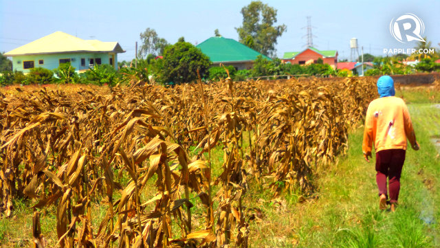 Crops And Livestock Philippines