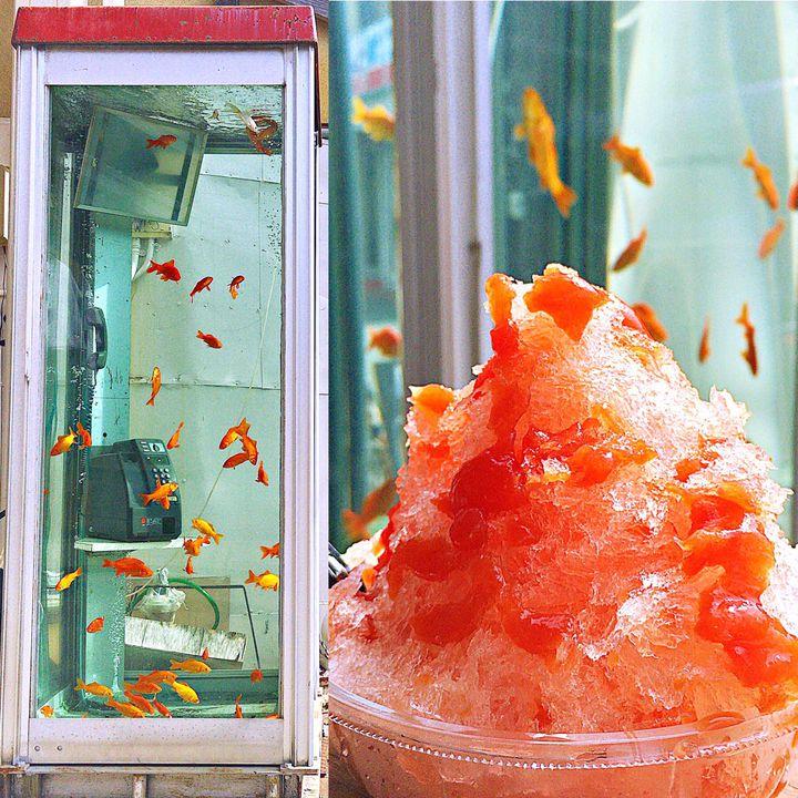 電話ボックスに金魚が泳いでる?金魚の町、大和郡山に行ってみない?