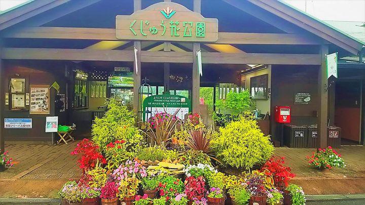 九州は元気です!日帰り旅行におすすめの花・食・温泉の楽園「くじゅう花公園」と久住高原の魅力