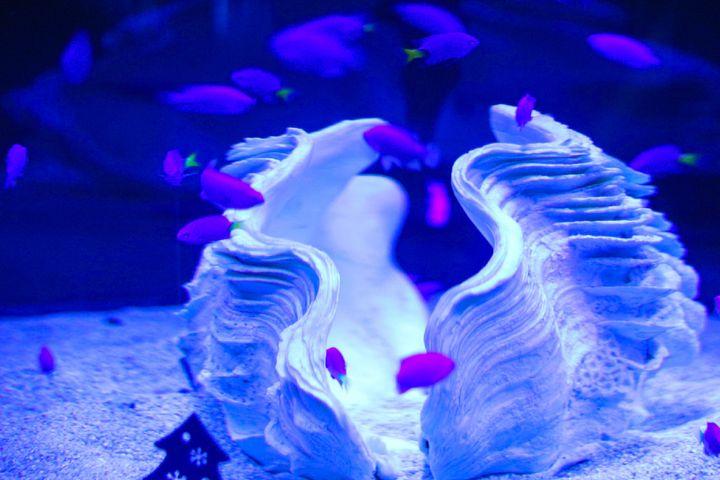 動物と仲良くなる!大分の水族館「うみたまご」でしたい5つのこと