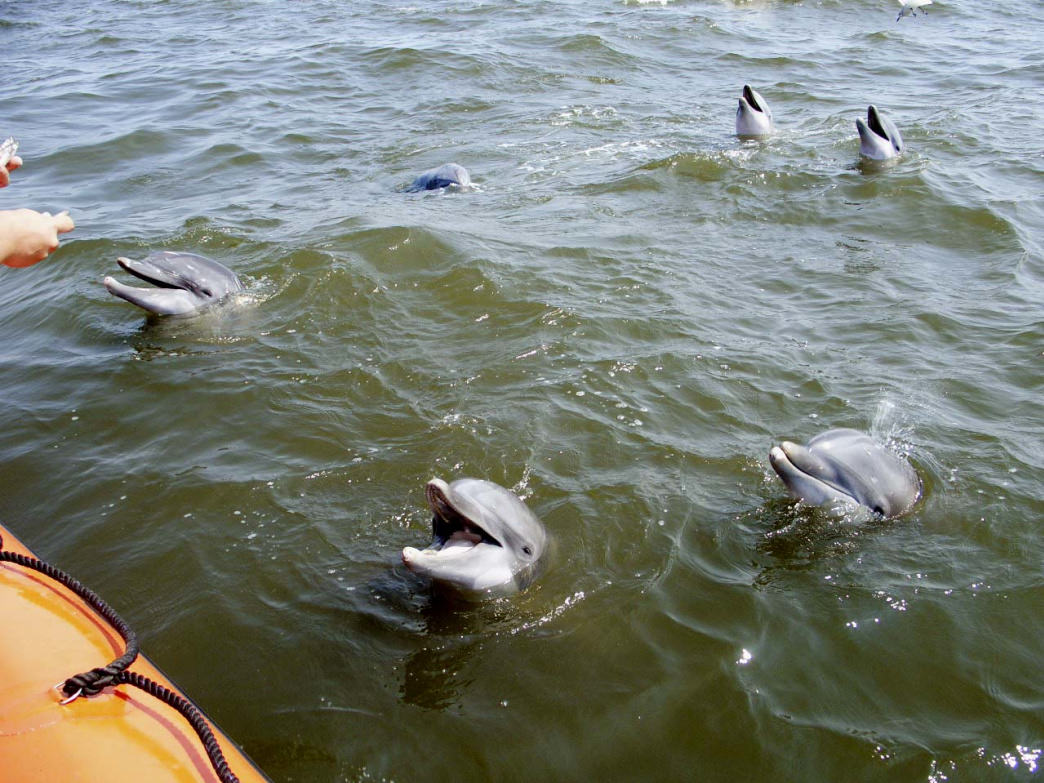 Paddling With Dolphins On The Alabama Gulf Coast