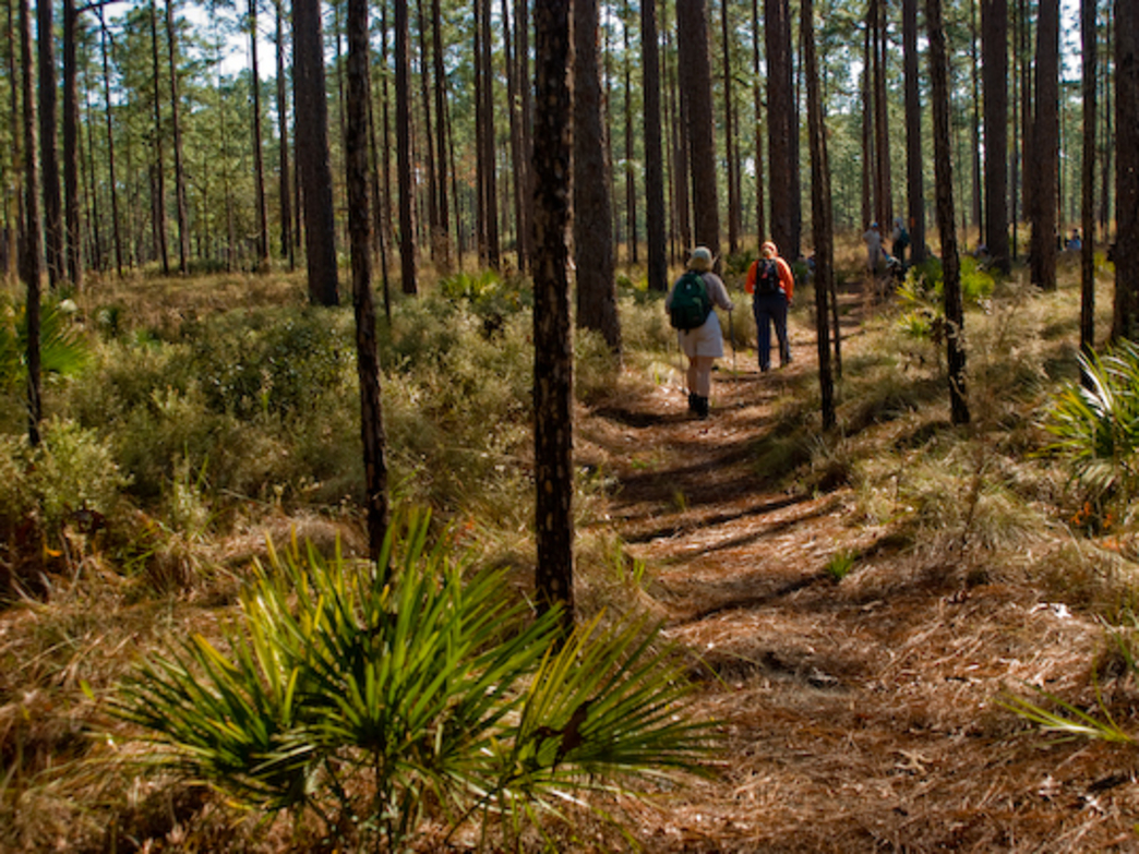 8 Of The Best Section Hikes On The Florida Trail
