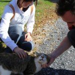 HZDG employees pet Organic Valley farm cat